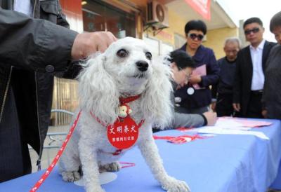 重庆:养犬不束链伤及路人 犬主被判赔偿近10万元
