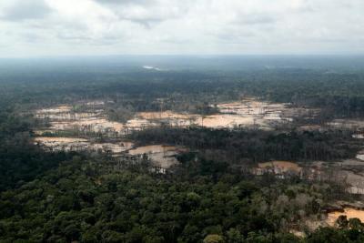 巴西森林面积32年间减少超一成 大多集中亚马孙雨林地区