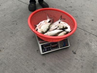禁渔期顶风作案 三人电捕鱼被抓