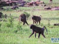 初见肯尼亚桑布鲁国家公园