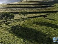 关山草原:绿茵似毯惹人醉