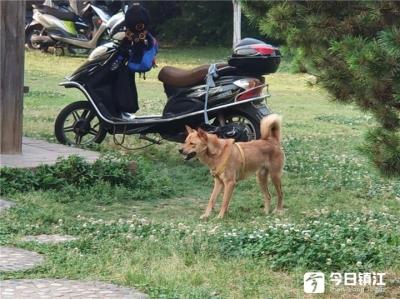 遛狗不牵绳、不铲屎…… 调查显示:这些养狗行为最惹人烦