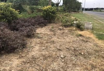 丹阳开发区公共绿化大面积被盗  疑似绿化专业人士所为