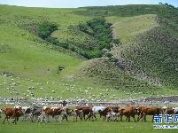 阿鲁科尔沁草原景色美