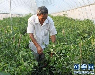 打造乡村产业融合发展高地!江苏新增15个农业产业强镇示范
