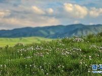 鲜花开满草原