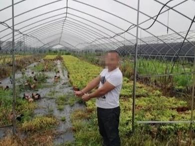 一夜之间8000余棵树苗不翼而飞  原是花木种植户带人偷盗