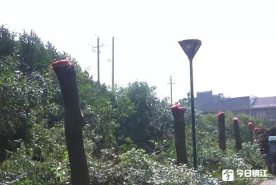 """丹阳一小区物业野蛮修剪:10米高大树被修剪成""""电线杆"""""""