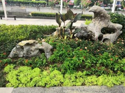 丹阳两处花坛打造成街头花境