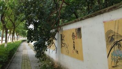 城东花山路一大树断枝还挂在树上,随时都有掉下来的危险!