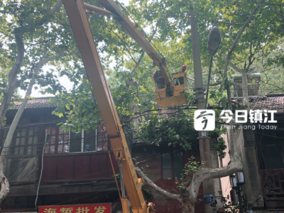 暴雨来袭 镇江及时修剪过密树枝 减少房屋安全隐患