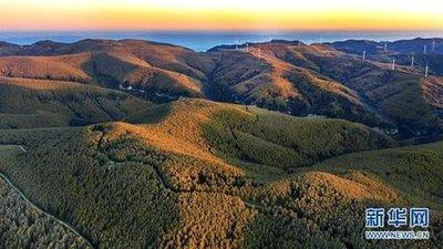 我国将进一步加强天然林保护与修复