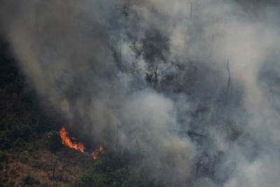 巴西或派军队扑救亚马孙雨林火灾