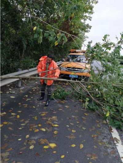 国省干线多处行道树倒伏、路段积水 镇江公路养护部门及时抢修清理,保障公路安全畅通