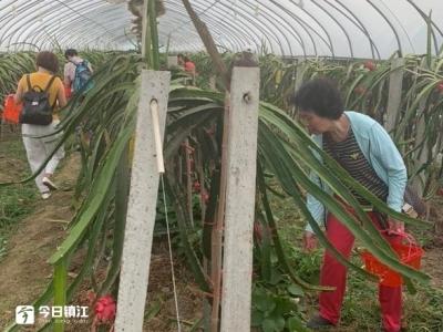 江苏南翔:将火龙果全身发挥出最大效益