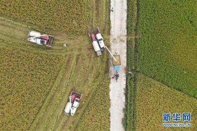 农业农村部部长韩长赋:今年我国粮食产量有望第5年稳定在1.3万亿斤以上