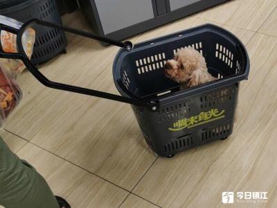 """超市购物车竟成宠物狗""""摇篮""""?多数市民表示没公德"""