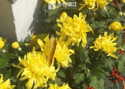 【网络中国节】要长寿,登南山,寿比南山!在镇江过重阳,不要太合适哦!