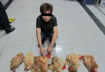 """吃鸡、钓鱼有""""妙招""""?涉嫌盗窃均获刑"""