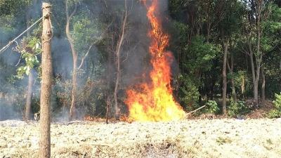 """男子焚烧枯树枝引小树林起火 巡逻辅警紧急""""客串""""消防员"""