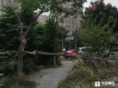 啥原因?镇江京口路人行道一行道树倒地半年无人管