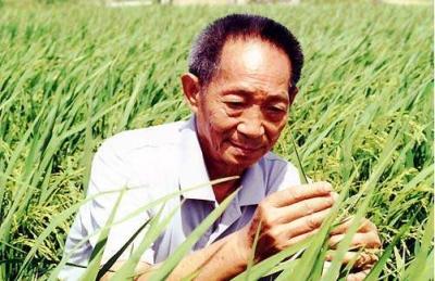 袁隆平团队将全面开展耐盐碱水稻育种工作