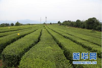 江苏多举措扶持小农户发展 至2022年每年培训12万人