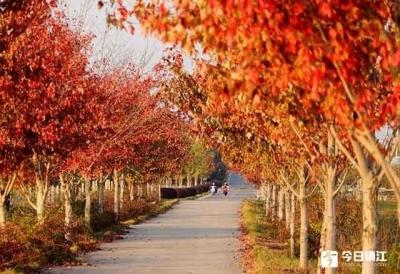 登高赏秋景、饮菊花酒……寒露的习俗都有哪些?
