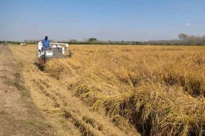 """江苏""""超级水稻""""亩产达1058.9公斤创新纪录"""