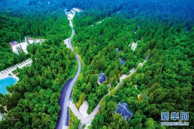 上半年全国森林旅游游客量达9亿人次
