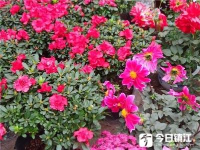 秋冬季,盆栽植物该如何养护?办公室又适合养什么植物呢?