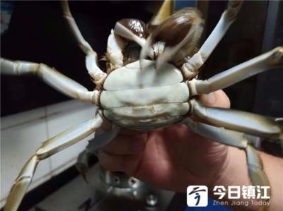 又到了吃螃蟹的季节啦,今年的第一个螃蟹你吃了吗?