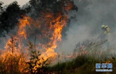 澳大利亚新南威尔士州林火已致4人死亡