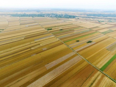 江苏麦油受旱面积达263万亩!农业部门紧急部署抗旱减灾工作