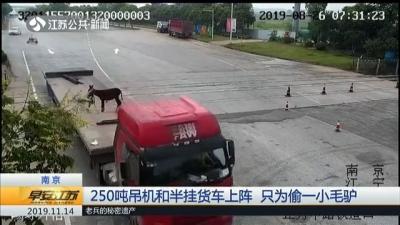 250吨吊机和半挂货车上阵 只为偷小毛驴!蟊贼:年底养肥了再杀
