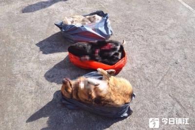 四人团伙流窜偷狗 手段残忍终被抓