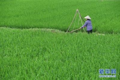 新中国70年农田灌溉事业进步巨大有力保障粮食安全