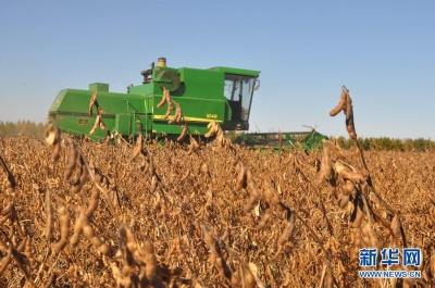 亩产447.47公斤!国产大豆单产创新纪录
