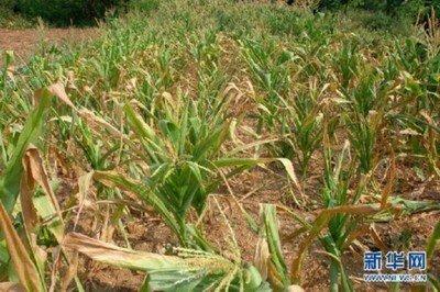水利部安排水利救灾资金1亿元支持南方旱区