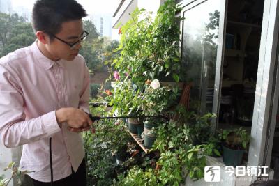 美翻了!江大的这名大男孩把宿舍阳台打造成绿色花园