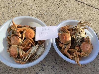 馋嘴男子偷了一筐大螃蟹 抓获时四只已经下了肚