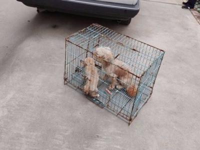 回应群众关切问题 润州开展流浪犬整治工作