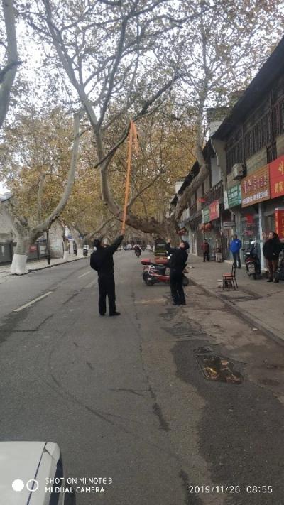 粗树枝悬挂在路中间  民警及时处置消除隐患
