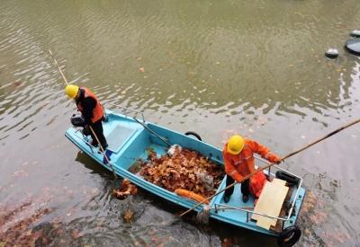丹阳城管局加大清扫落叶力度 为市民打造整洁环境