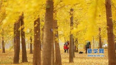 未来三天江苏多云为主 淮北地区最低气温5℃