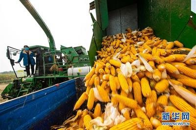 中美合作科研成果有助玉米增产