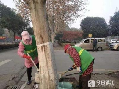 树木涂白,丹阳园林部门在行动