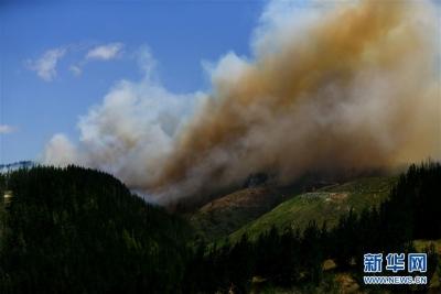 新西兰北岛突发森林火灾 天干风急大火迅速蔓延