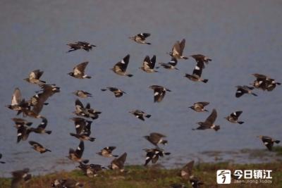 镇江两处湿地纳入省级重要湿地名录管理