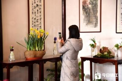 """水仙花芬芳绽放 春节快来北固山看""""仙子"""""""